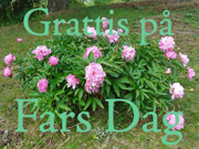Fars Dag-kort 2 / Swedish Father's Day card 2
